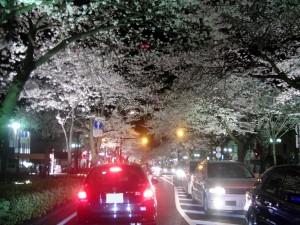 日立市夜桜